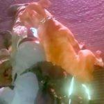 Cane fa la guardia al cadavere del suo padrone: immagini strazianti fanno il giro del web