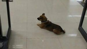 Trascorre tre mesi nella hall di un ospedale: cane attende i