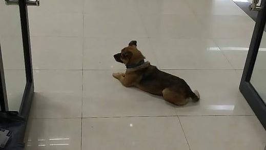 Trascorre tre mesi nella hall di un ospedale: cane attende il ritorno del padrone ormai deceduto