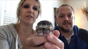 Nato Gattino con due facce in Oregon |  famiglia lo accudisce con amore