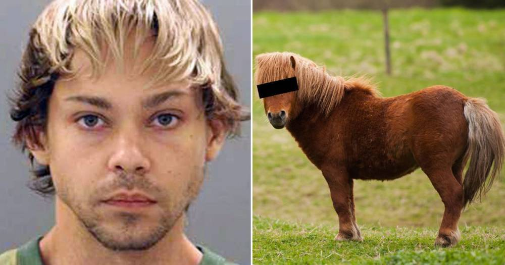 stupratore pony