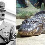 Saturno, l'alligatore di Hitler, si è spento ad 84 anni