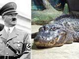 Hitler alligatore