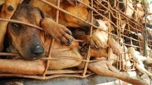 Festival di Yulin: continuano i 'wet market' in pieno Covid-19