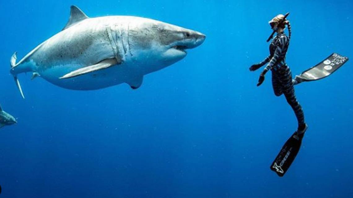 Quali sono i 10 posti più pericolosi al mondo per possibili attacchi di squali?