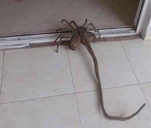 Alien tendenza su Twitter: l'animale condiviso da Gianki Gianki è virale