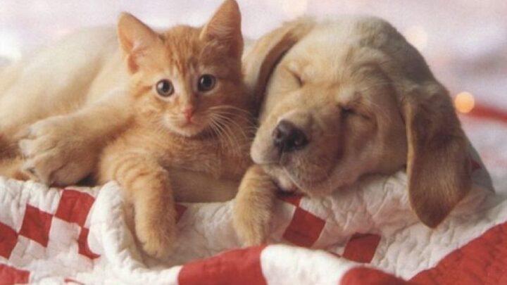 L'indovinello degli animali sul letto: qual è la soluzione? Il ragionamento e l'inganno