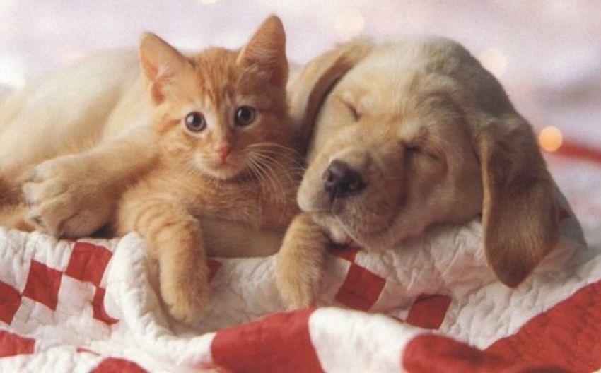 Animali sul letto