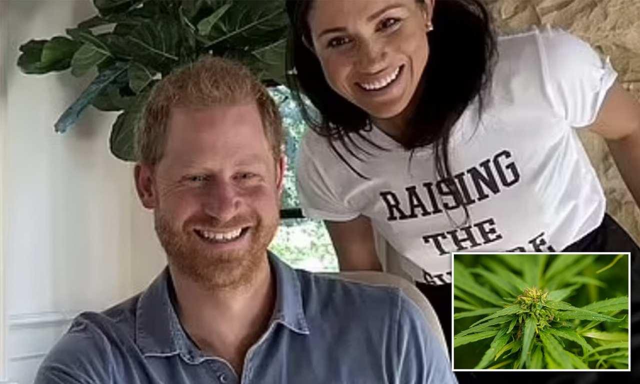 harry meghan cannabis fabbrica odore